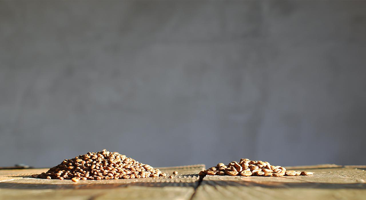 О чем говорит размер кофейного зерна?